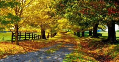 Natureza  é  Poesia,  Saúde  e Vida
